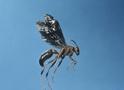 Thumbnail of Wasp
